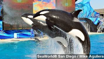 Proposed Bill In Calif. Bans Using Killer Whales In Shows